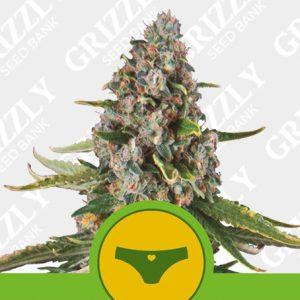 Sherbet Queen Automatic Seeds