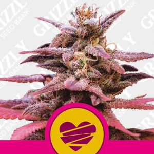 Wedding Crasher Feminized Seeds